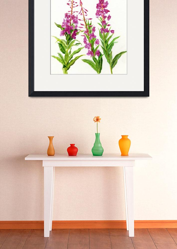 """""""Fireweed (white background)&quot  (2014) by Pacific-NW-Watercolors"""