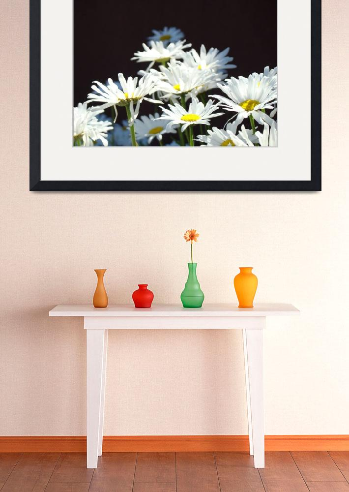 """""""White Daisy Flowers Floral Art Prints Daisies&quot  (2014) by BasleeTroutman"""