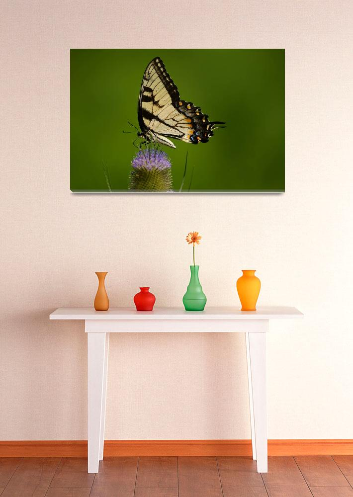 """""""Beautiful Butterfly&quot  (2010) by btn1100"""