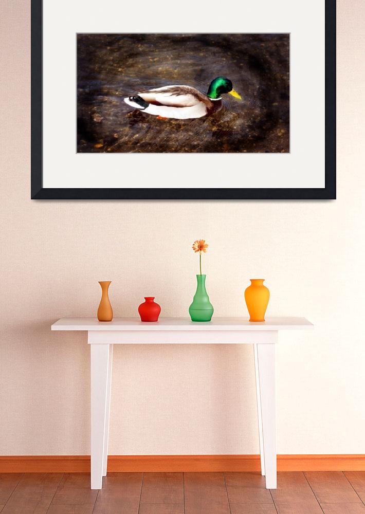 """""""Duck in Shallow Water""""  (2011) by AprilO"""