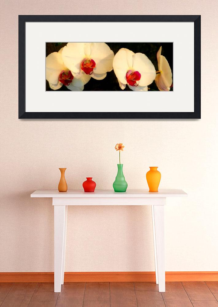 """""""white orchids brushstrokes""""  by lizmix"""