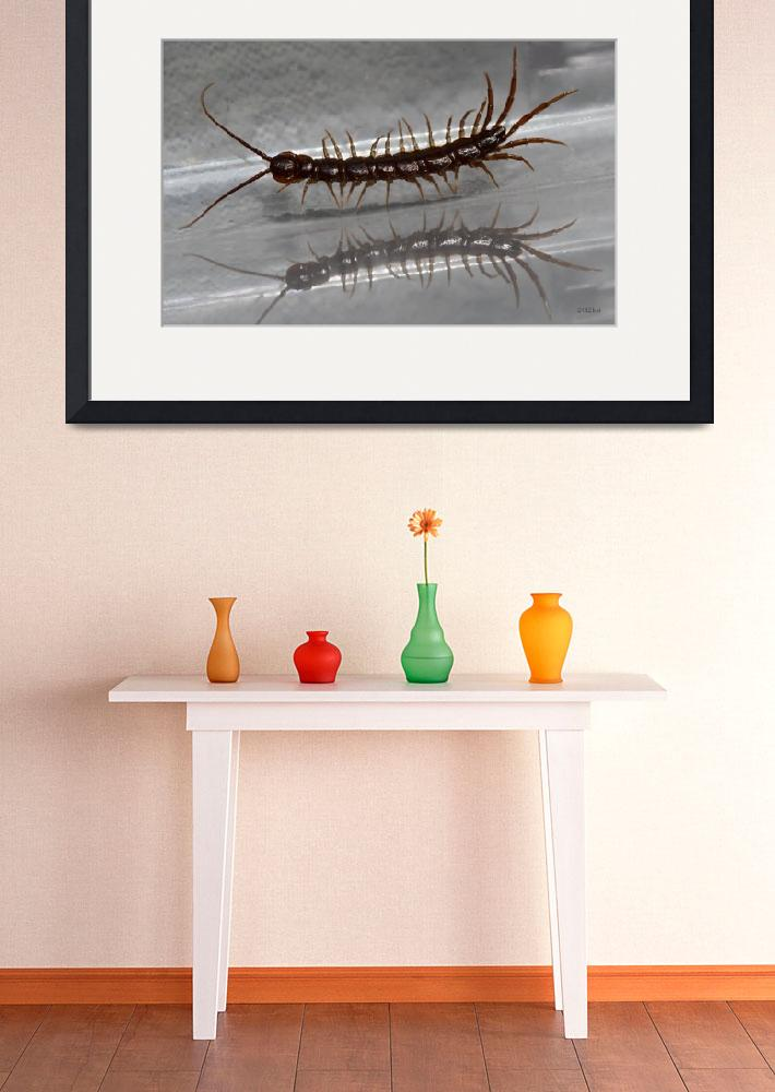 """""""Pacing Centipede with Reflection""""  (2012) by theblueplanet"""