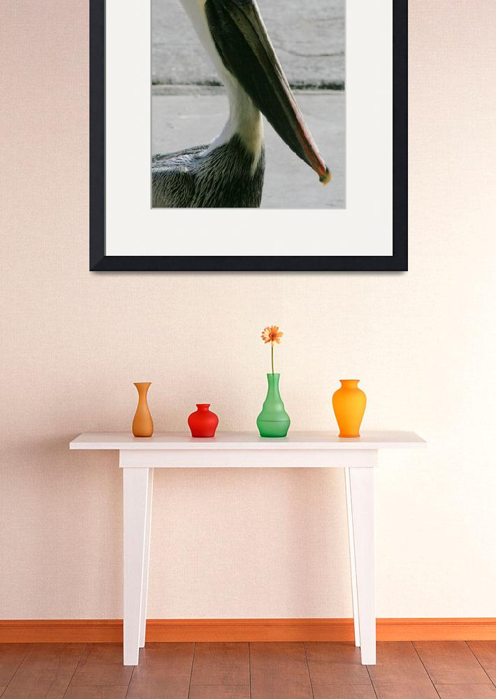 """""""Pelican Profile&quot  (2009) by RonWooten"""