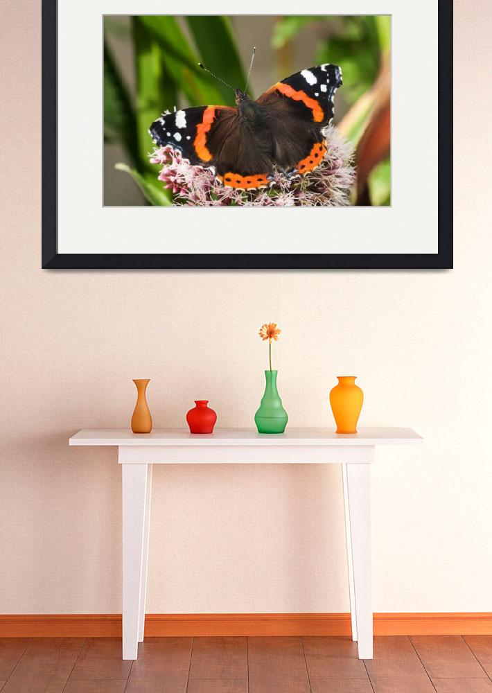 """""""red admiral_DSC1736""""  by SusanJanePepper"""