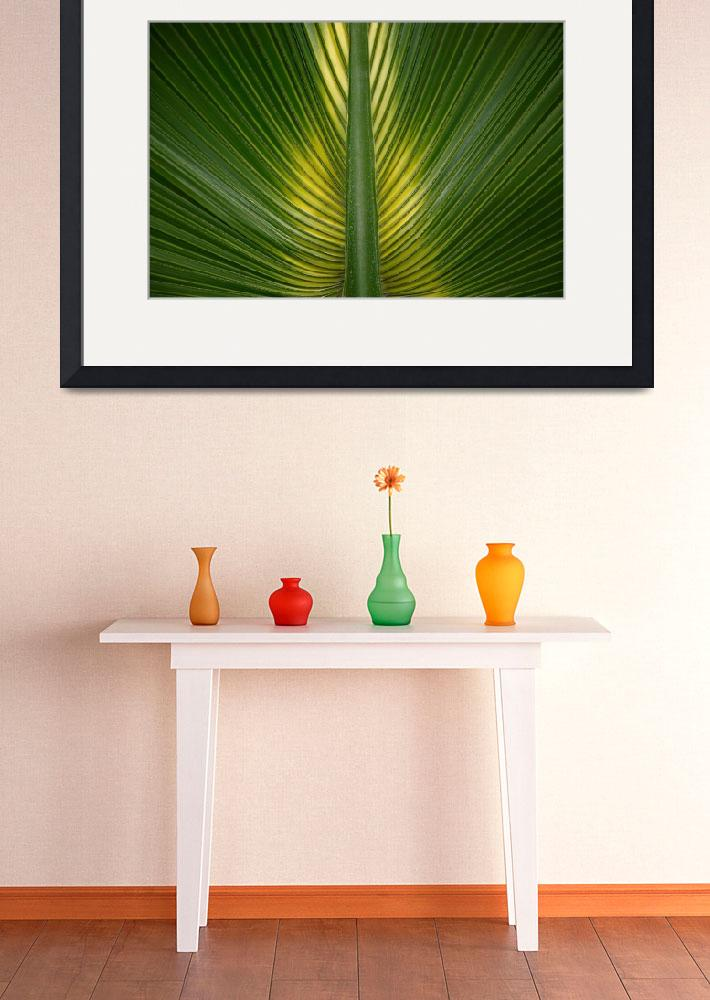 """""""Palm Leaf Symmetry&quot  (2006) by JohnGaffen"""