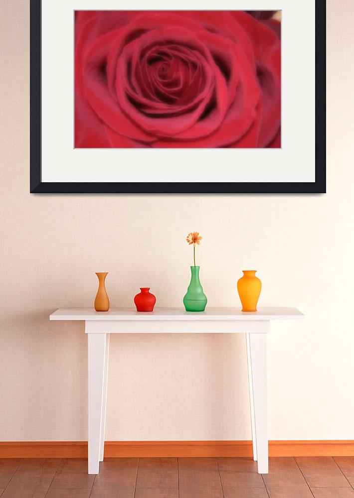 """""""Beautiful Red Rose&quot  (2008) by MNTPhoto"""