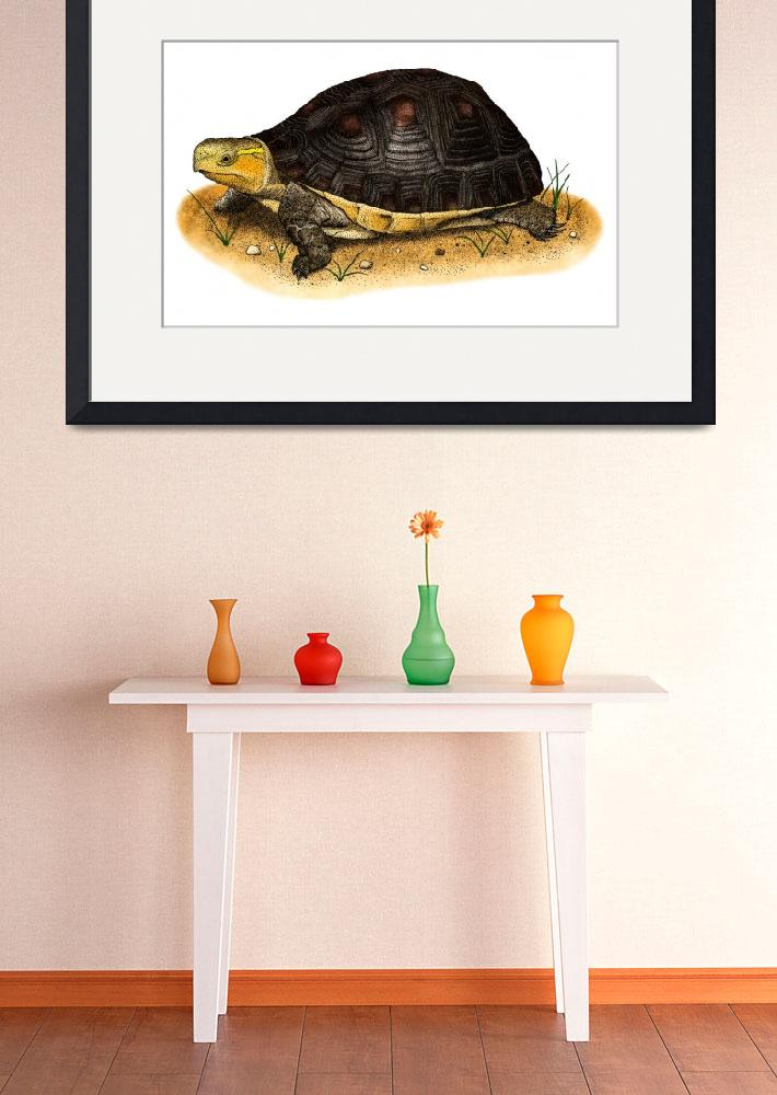 """""""Chinese Box Turtle&quot  by inkart"""