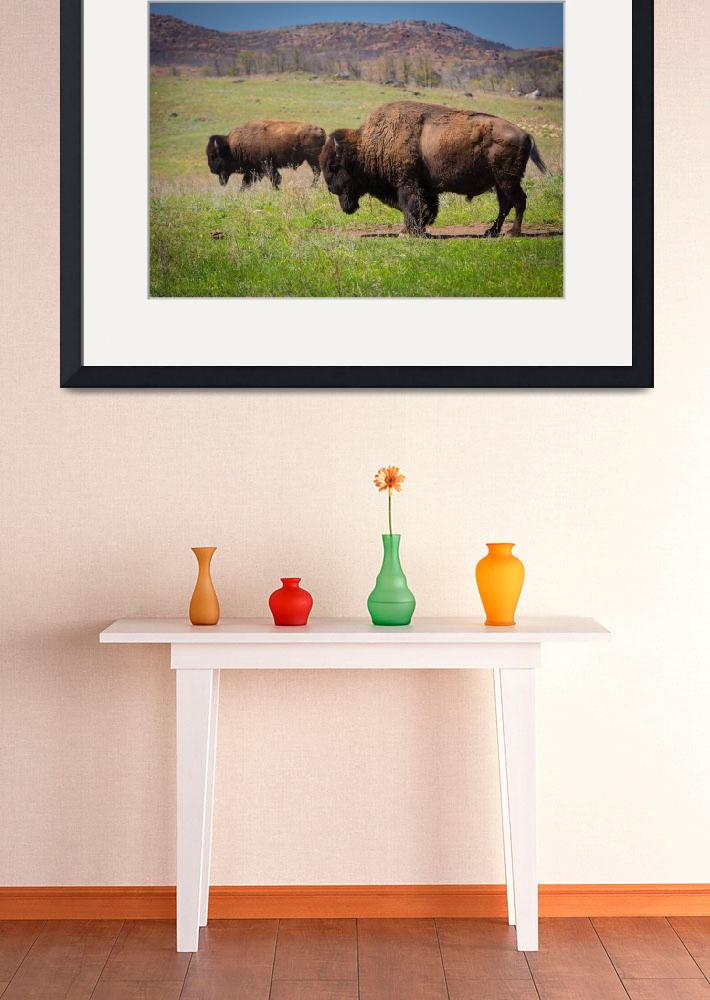 """""""Grazing Bison&quot  (2013) by Inge-Johnsson"""