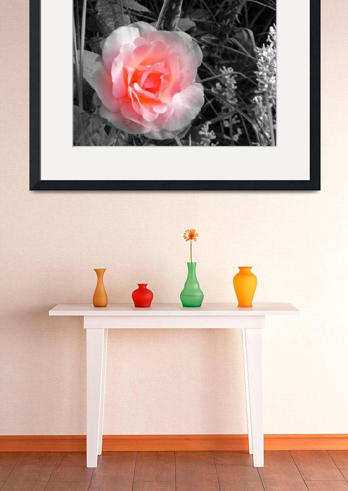 """""""Fading Rose&quot  (2011) by photosbybritney"""
