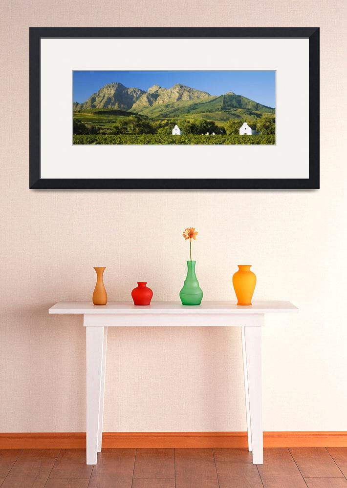 """""""Vineyard in front of mountains&quot  by Panoramic_Images"""