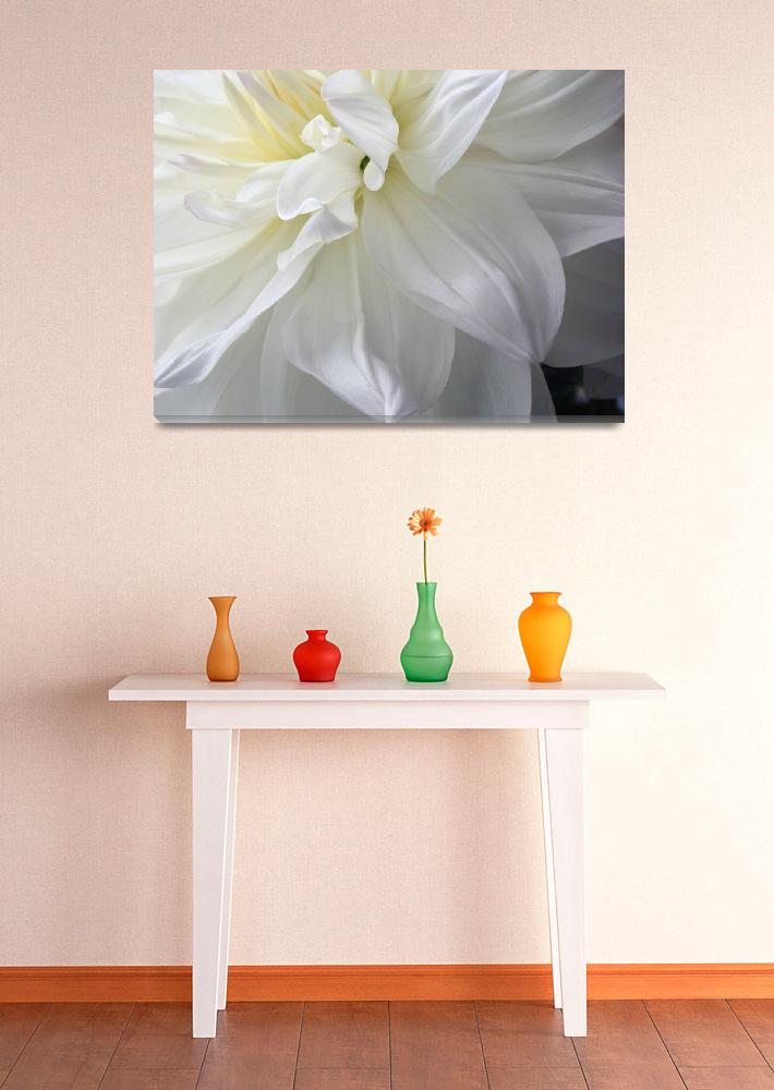 """""""White Dahlia&quot  (2007) by judystalus"""