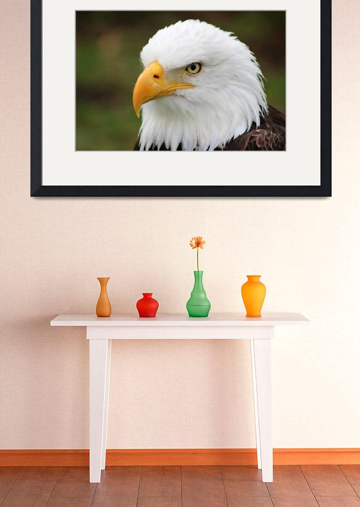"""""""Head of American Bald Eagle&quot  (2014) by rhamm"""