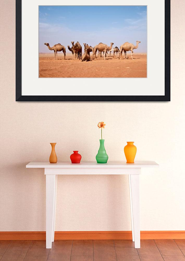 """""""Camel""""  (2010) by SaharaPictures"""