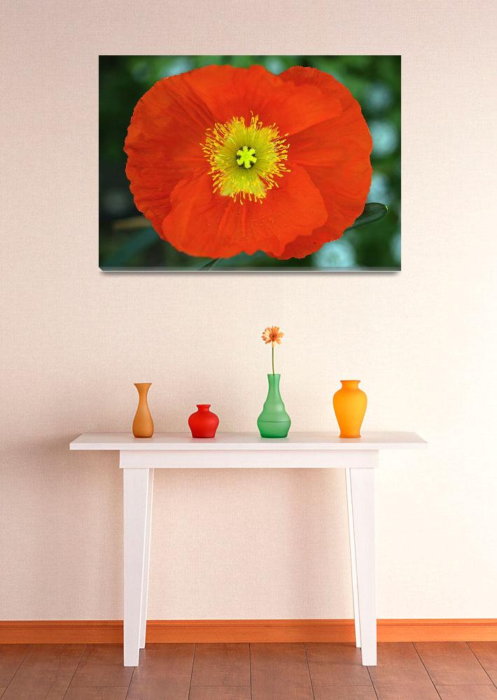 """Red Poppy""  (2008) by paulhood"
