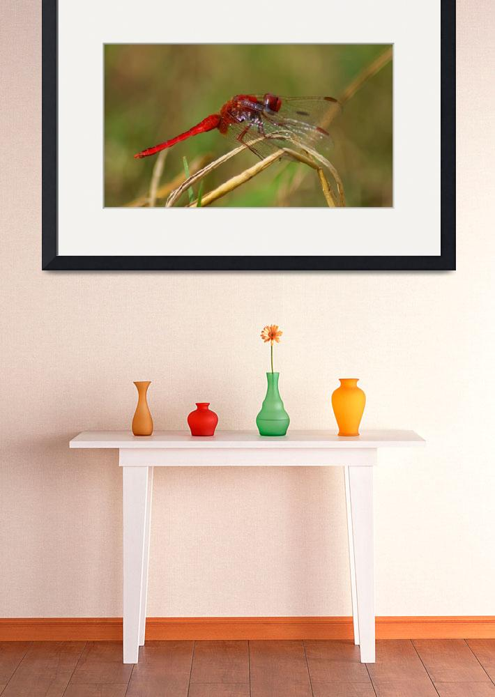 """""""African Red Dragonfly&quot  (2010) by Andrea_Donaldson"""