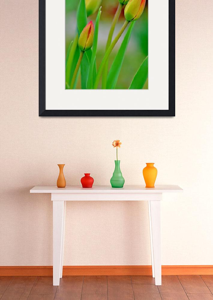 """Tulip Buds&quot  (2014) by joanhan"