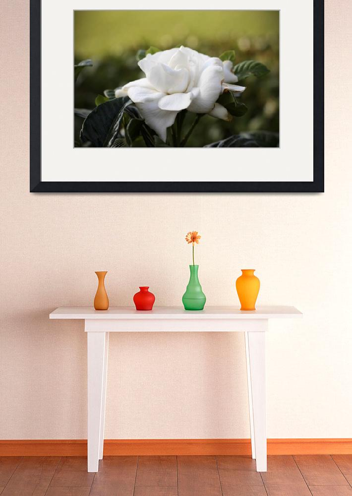 """""""white flower (gardenia)&quot  by whidbychick"""
