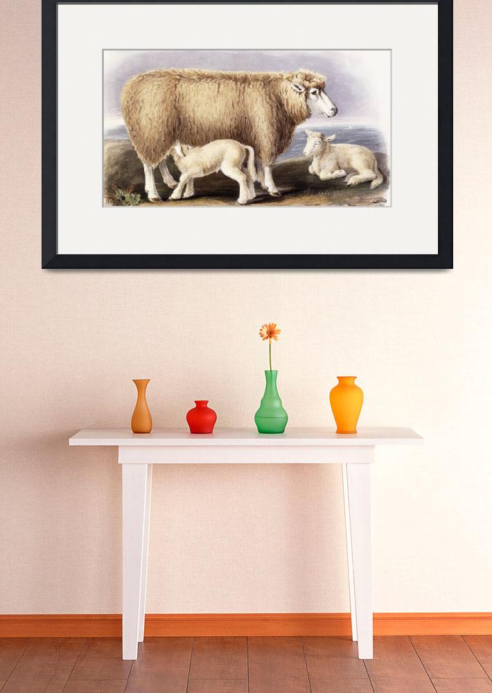 """""""The Cotswold Breed, Ewe, 8 years old, 1840-1842 (h&quot  by fineartmasters"""