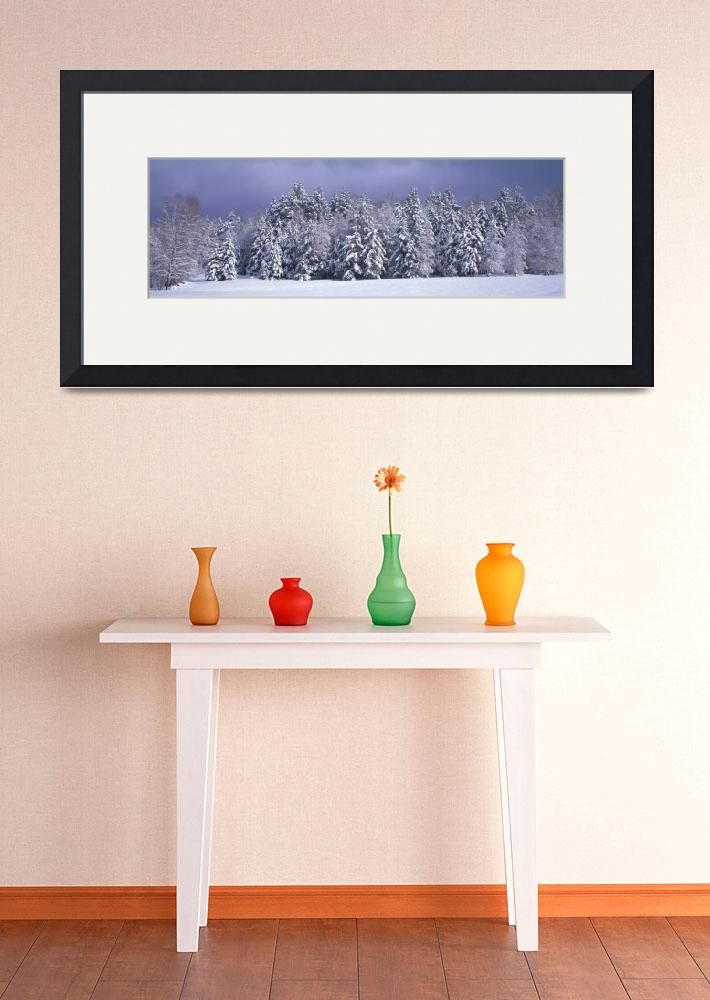 """Winter Trees Waterbury VT&quot  by Panoramic_Images"