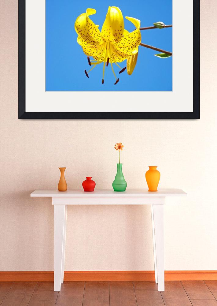 """""""Yellow Tiger Lily Flower art print Blue Sky Baslee&quot  (2010) by BasleeTroutman"""