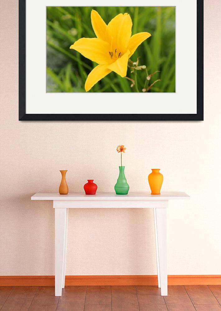 """""""Yellow Lily&quot  (2014) by rhamm"""