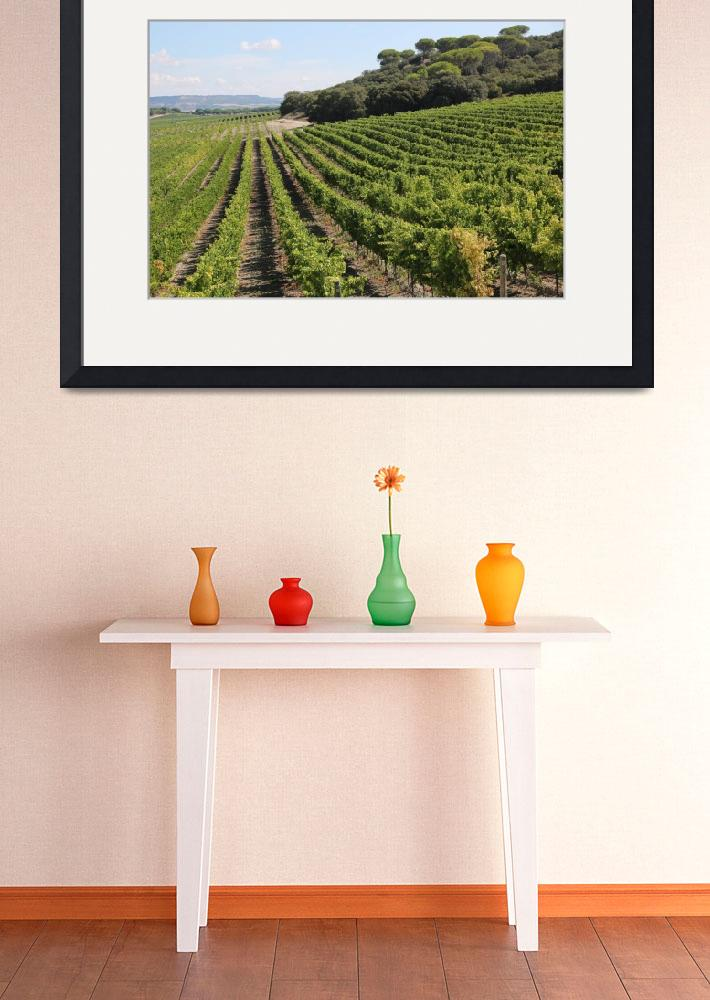 """Spanish Vineyard&quot  (2014) by Groecar"