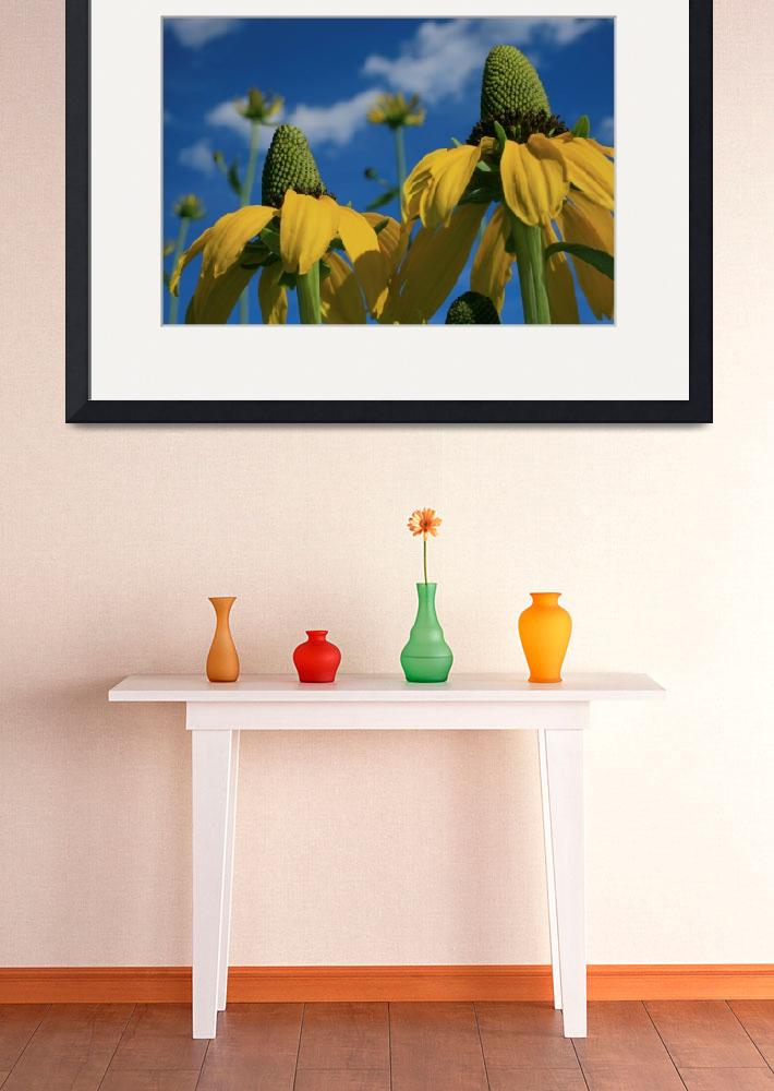 """""""Giant Coneflowers Reaching for the Sky...&quot  (2012) by newimage"""