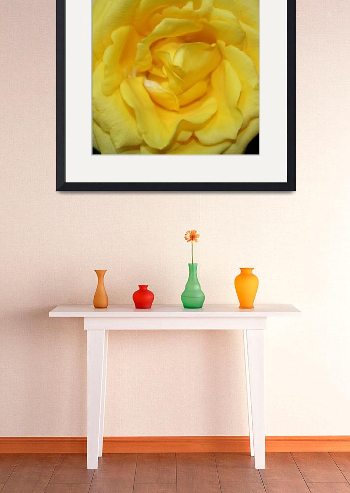 """""""yellow rose&quot  (2008) by sreese"""