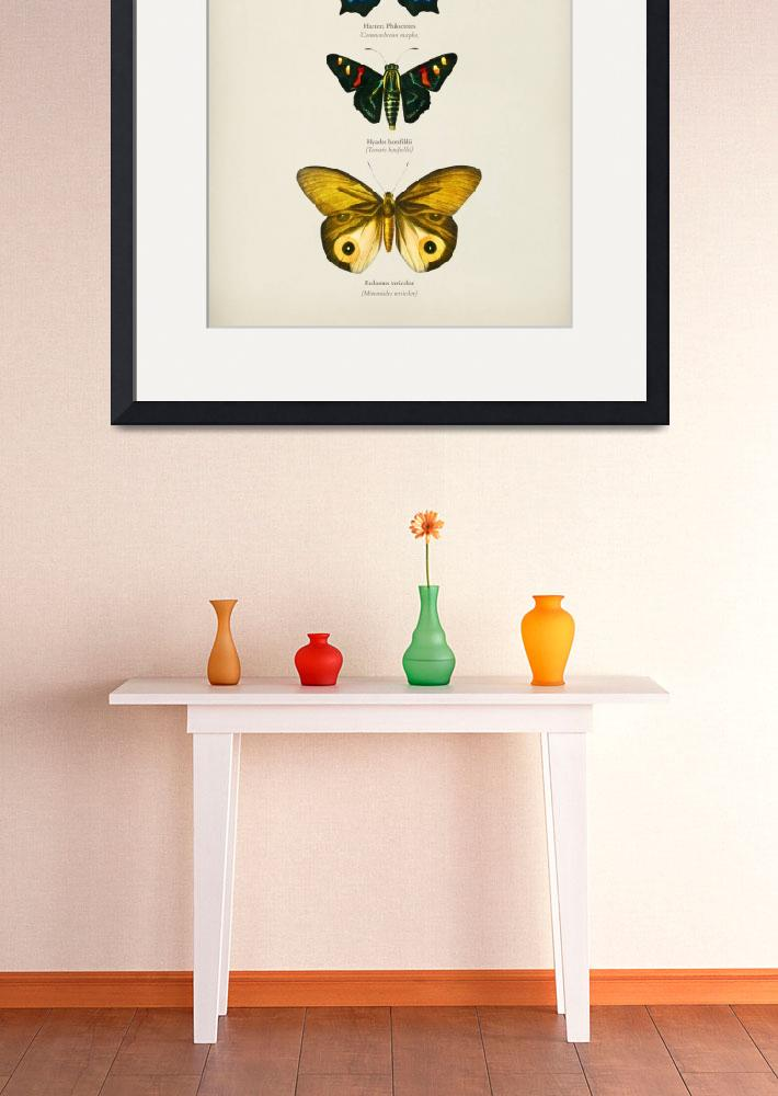 """""""Different types of butterfly illustrated by Charle""""  by motionage"""