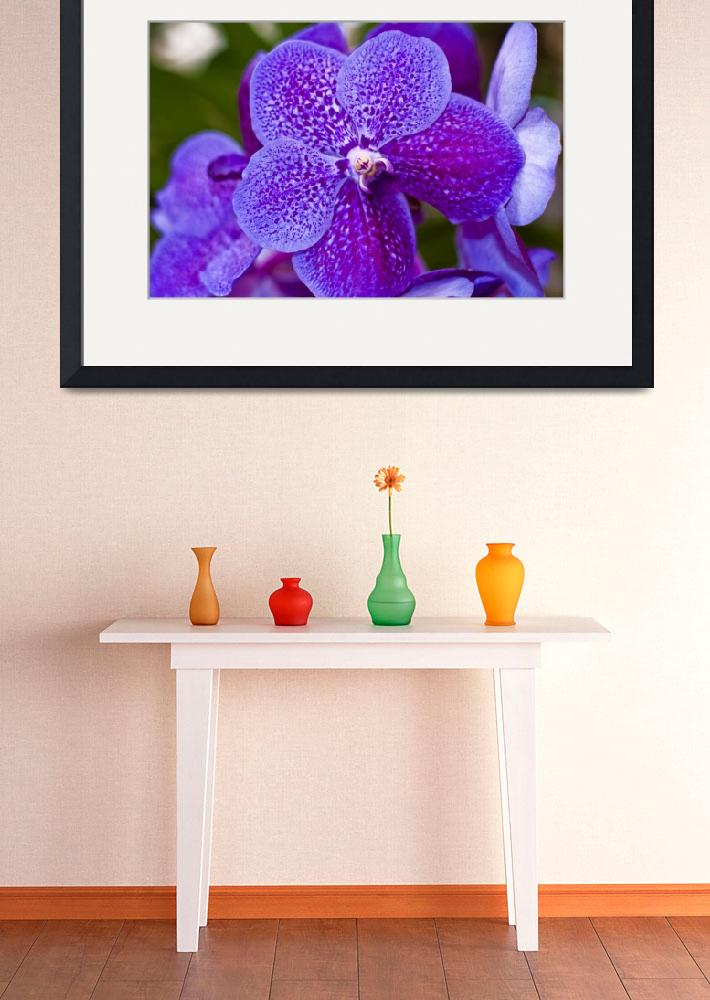 """""""Madeira Orchids 7&quot  (2009) by JoaoFialho"""