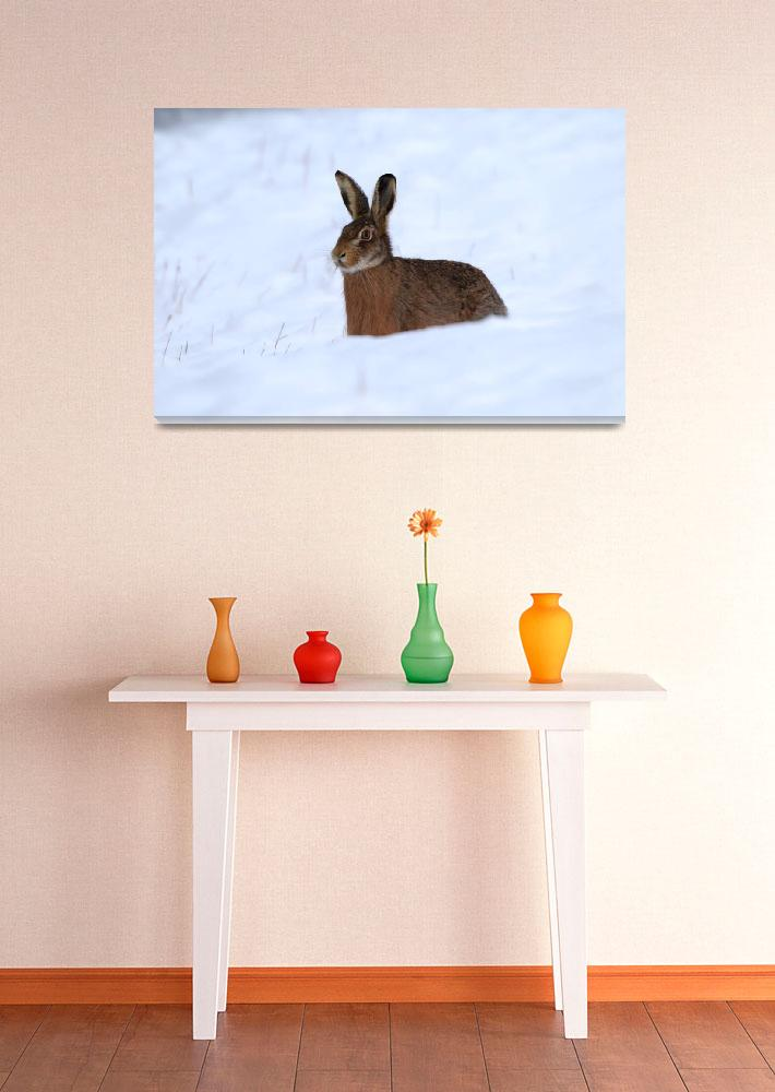 """""""Wild hare in snowdrift&quot  (2014) by MilanMKM"""