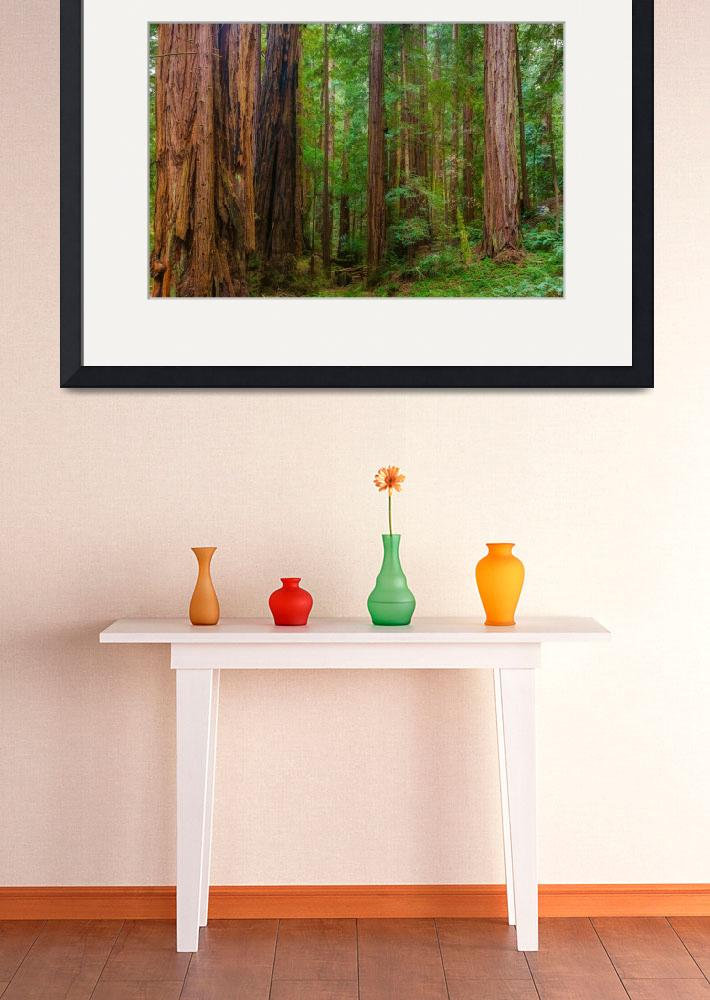 """""""Muir Woods, California&quot  (2015) by AnnaMiller"""