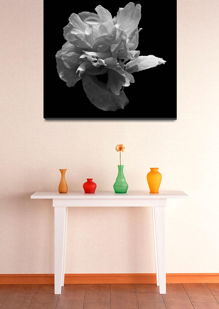 """""""Double Blossom In Black And White&quot  by bavosiphotoart"""
