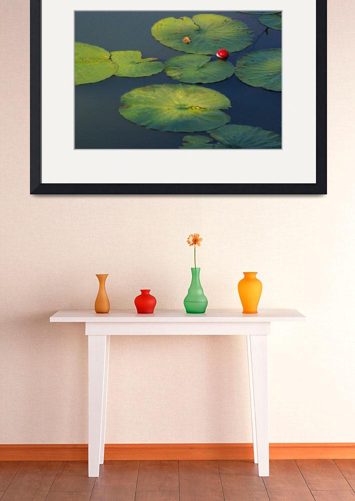 """Lily Pond&quot  (2007) by Kenneth_MacLeod"