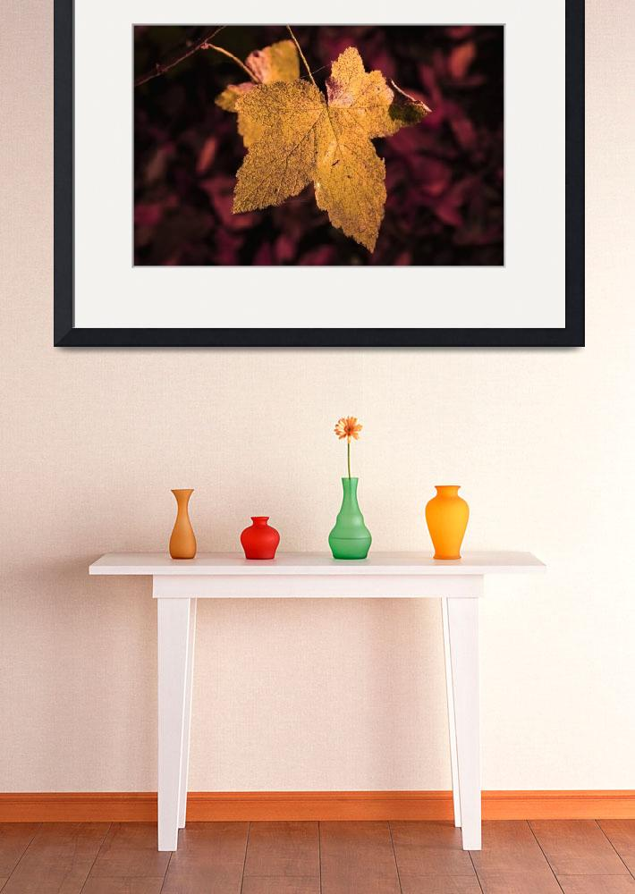 """Large Golden Maple Leaf_3170""  (2005) by AmbientCreations"