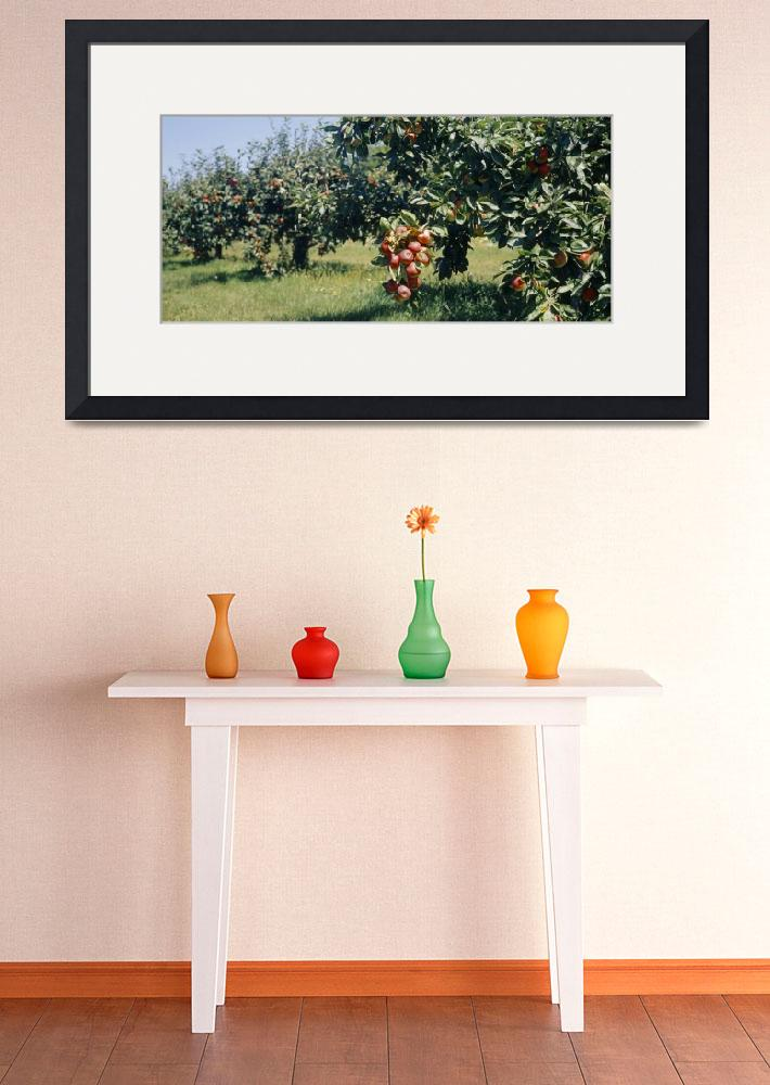 """""""Apple Trees&quot  by Panoramic_Images"""