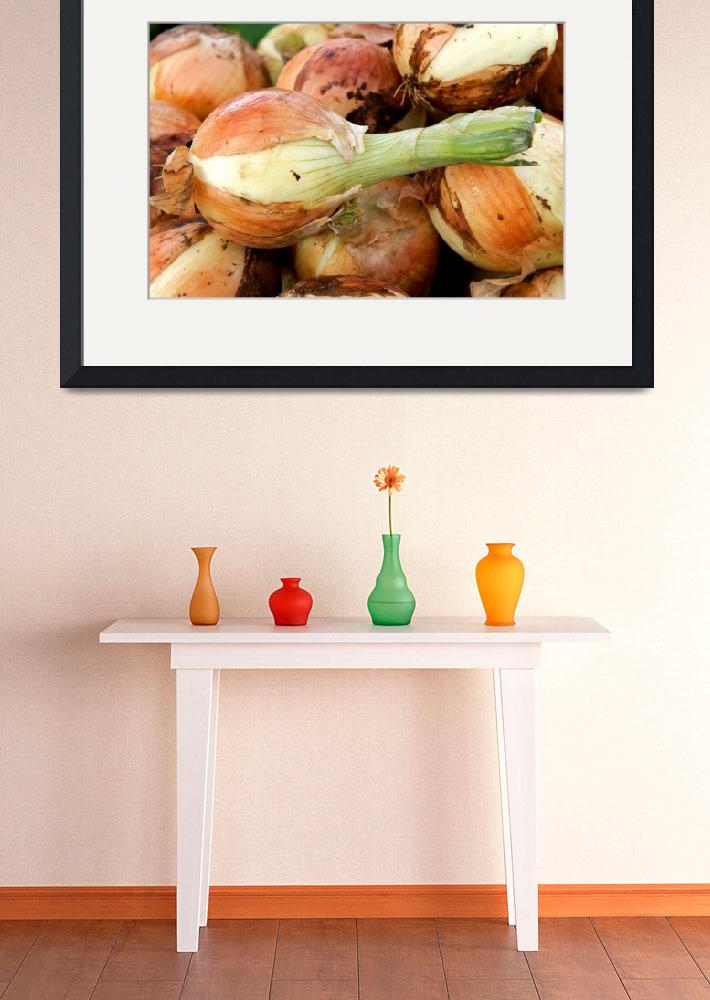 """""""Fresh Onions&quot  (2009) by DavidKay"""