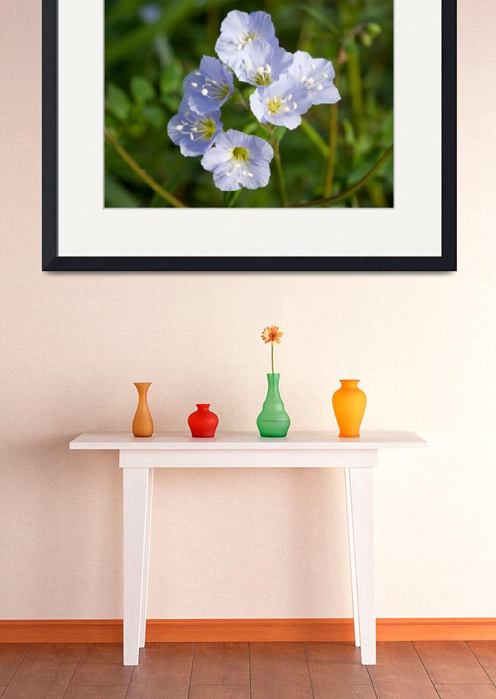 """""""Willen Collection Framed Print&quot  by buddakats1"""
