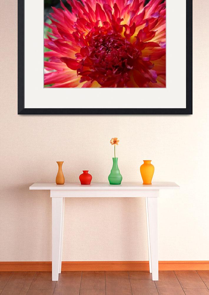 """CHRISTMAS GIFT GALLERY Red Purple Dahlia Flower&quot  (2009) by BasleeTroutman"