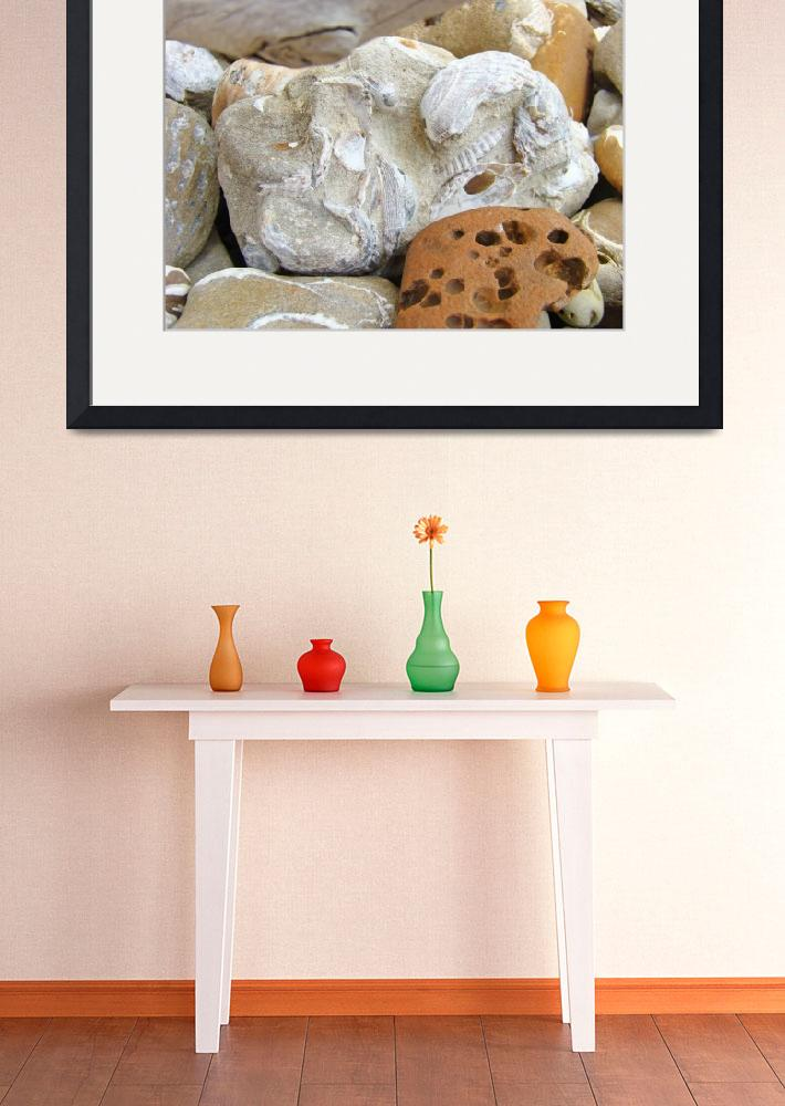 """Coastal Beach Fossils Shells Art Prints Rocks""  (2014) by BasleeTroutman"