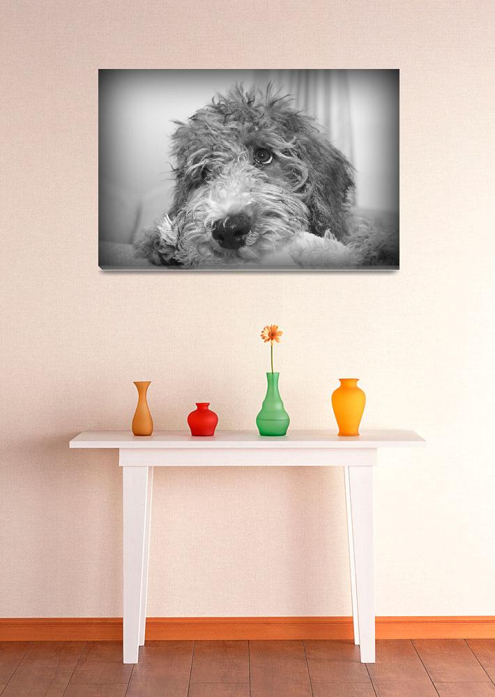 """""""Goldendoodle""""  (2007) by themuppet"""