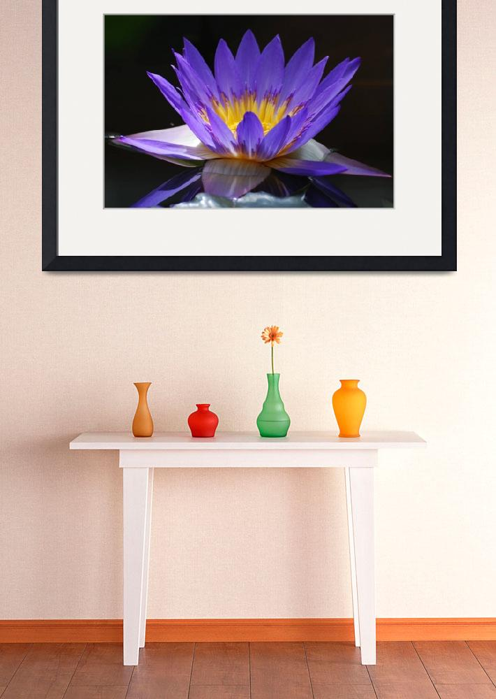 """water lily&quot  by spriggs"