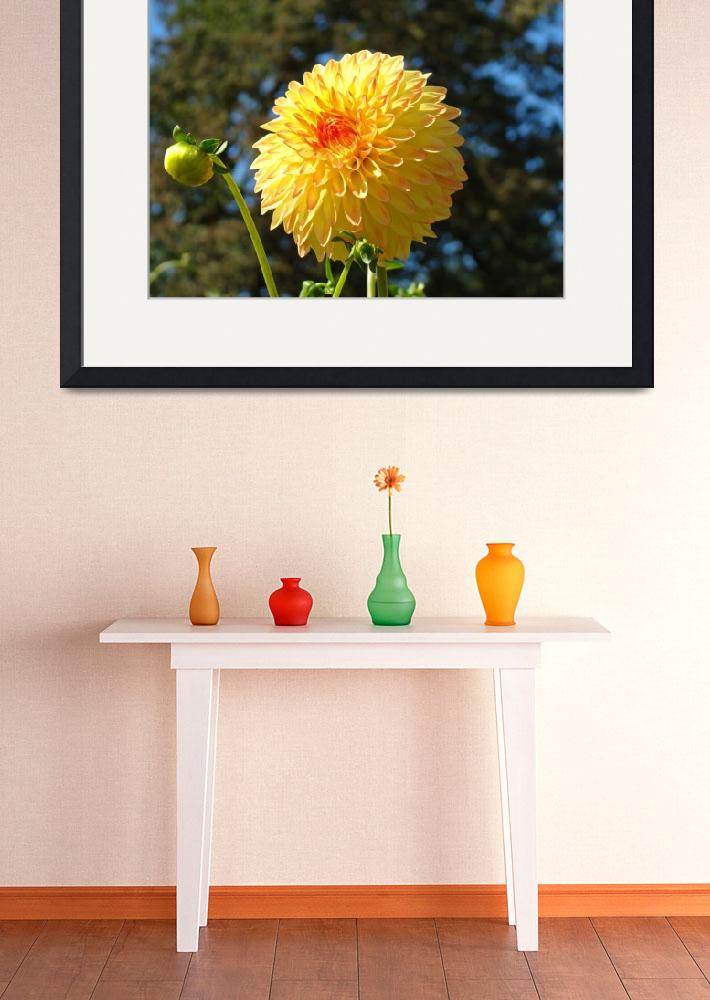 """Dahlia Flower Garden art prints Botanical Summer""  (2011) by BasleeTroutman"