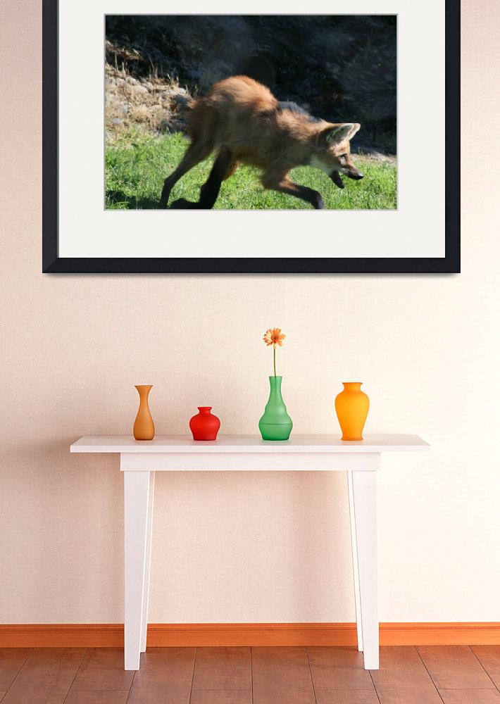 """""""South American Maned Wolf&quot  (2008) by JWCallahan"""