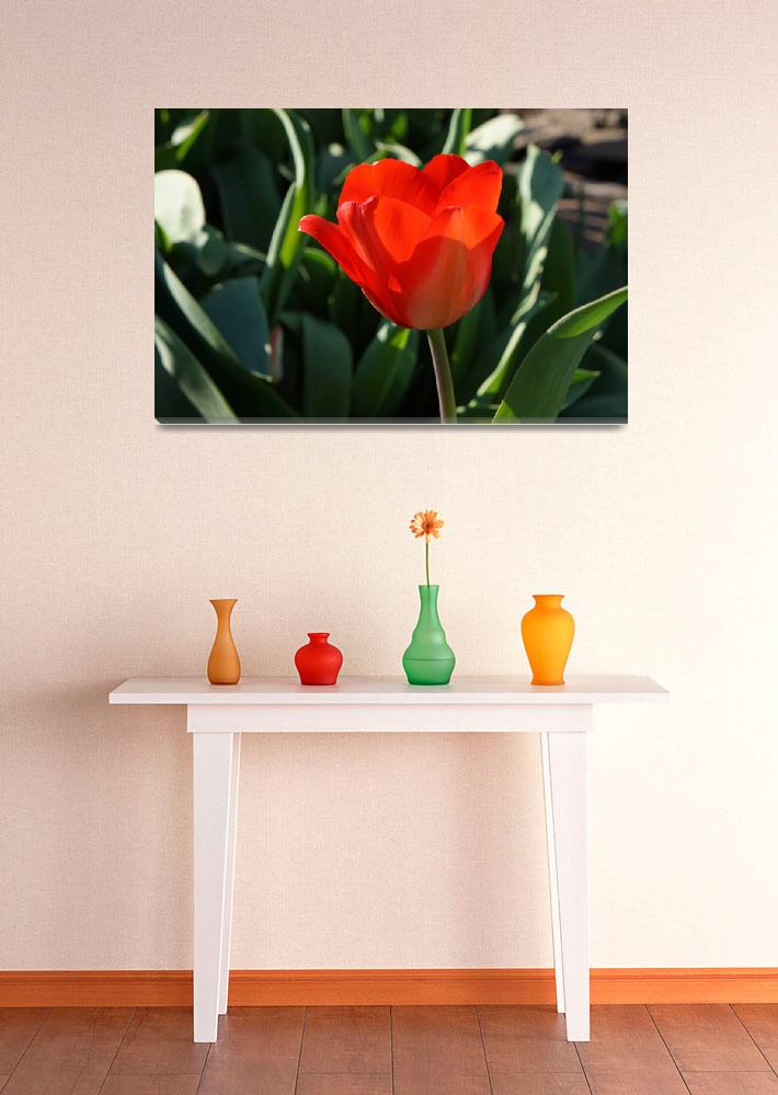 """RED Tulip Flowers Art Prints Giclee Canvas&quot  (2014) by BasleeTroutman"