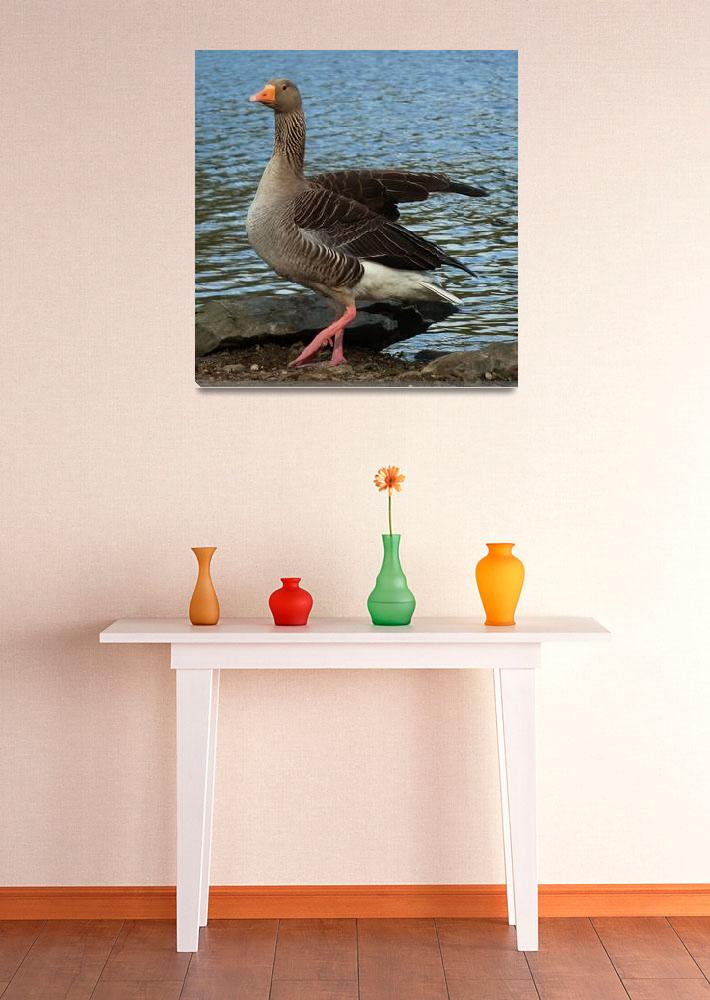 """""""Goose Stepping""""  (2012) by JMcCoubreyPhotography"""