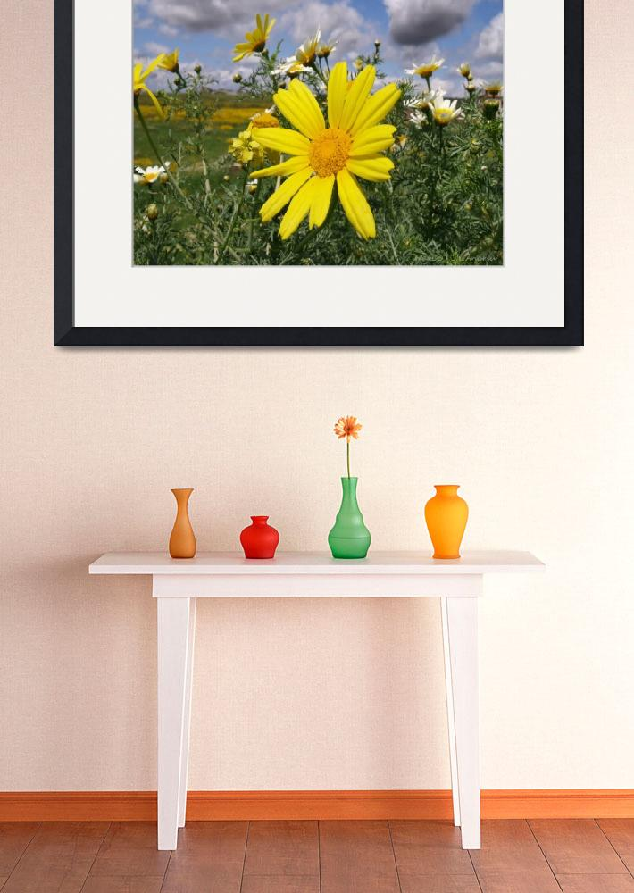 """""""Spring Flowers&quot  (2008) by IMAX007"""
