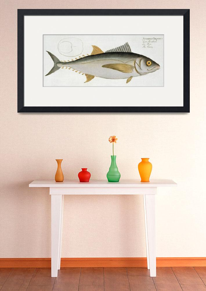 """""""Tuna (Scomber Thynnus)&quot  by fineartmasters"""