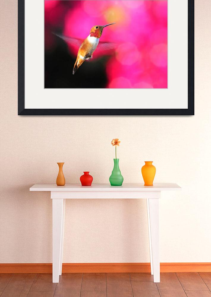 """""""Rufous Hummingbird on Pink&quot  (2016) by LynnBauer"""