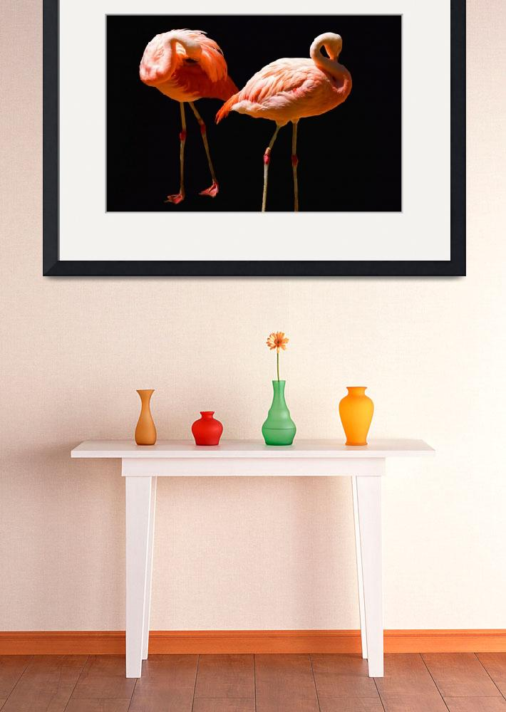 """""""Flamingos&quot  by kenrainwaterphotography"""